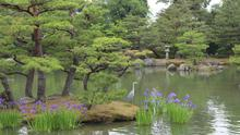 Kinkakuji's paradise gardens, which include a flying crane lake and a tortoise island, were designed for strolling and meditating, as Buddha once did
