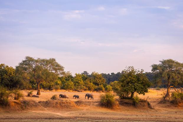Malawi: wilderness parks and game reserves are thriving there again