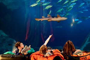 """Children in the demi-tunnel at Plymouth's National Marine Aquarium as part of a mock """"sleeping with the sharks"""" evening."""