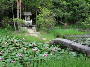 The Nakasendo Way, which connects Kyoto and Edo - modern-day Tokyo -  is incredibly beautiful. This picturesque ancient lily pond, Benten-ike, is past the post-town of Hosokute