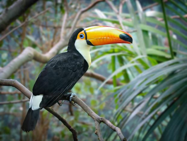 A toucan in the rainforest