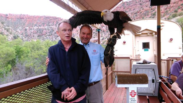 My fine feathered friend: An eagle this size could crush a journalist's skull in seconds, a fact Shane seems well aware of