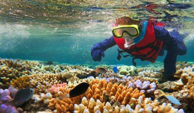 & # 39; It is easy to understand why David Attenborough maintains that his first reef experience was the most magical moment of his career & # 39; & # 39; title =