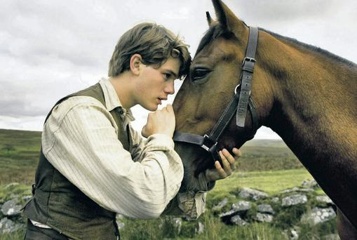 The plight of horses in the Great War inspired the movie 'War Horse'.