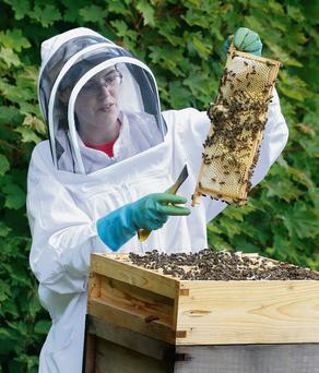 Beekeeper Roisin Shanahan checks the progress of one of her beehives as the warmer weather has sparked the bees into action. Photo: Ronan Lang/Feature File