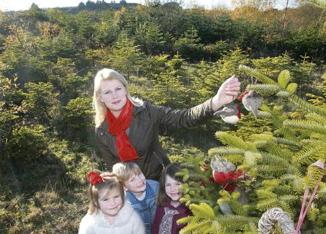 TREE-MENDOUS: Marie and Chloe, Thomas and Lexi spend the morning choosing their Christmas tree