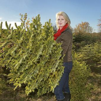 TREE FARM: Marie with a Nordman Fir