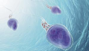 Male fertility has dropped significantly in the last number of decades. Photo by Thinkstock