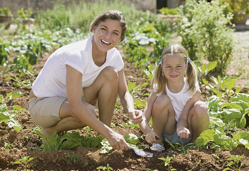 This summer made for pleasant times in the veg patch. Photo: Thinkstock