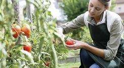 Saving a variety of fruit and vegetable seeds provides a diverse range of tastes and nutritive values. Photo by Thinkstock