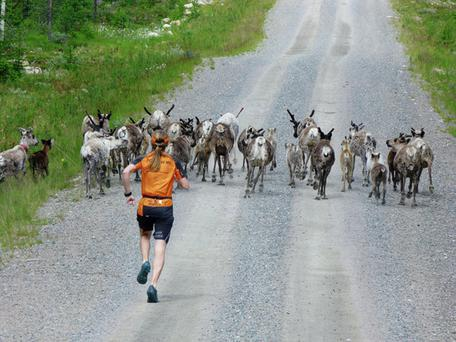 The Lapland ultra-marathon takes place in Adat, Sweden.