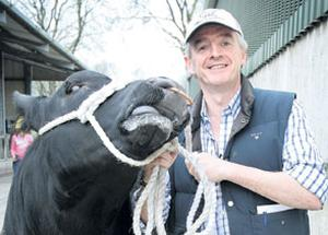 HOBBY FARMER: Ryanair chief executive Michael O'Leary sold 40 Angus cattle for a total of around €80,000 yesterday. Photo: Tony Gavin