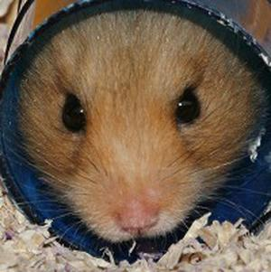 A Northamptonshire teenager has admitted cooking a hamster in a microwave
