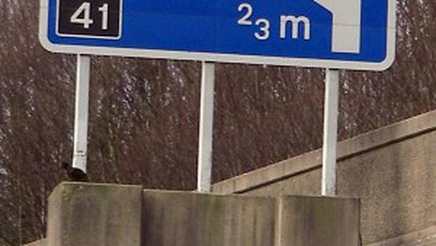 A cat had to be rescued after it was stuck on a motorway sign platform on the M4 near Briton Ferry, south Wales (PA/RSPCA)