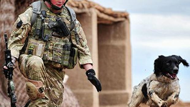 L/Cpl Liam Tasker with springer spaniel cross Theo, who has broken the record for finding the most homemade bombs