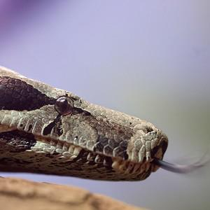 Police have appealed for help in finding a snake which was stolen from a house in Nottinghamshire