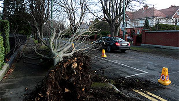The fallen tree was later moved to allow traffic to pass