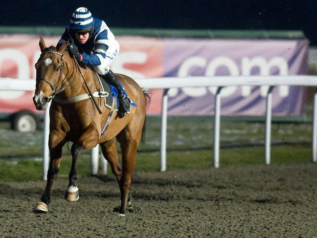 Oscar Whisky: Will he stay three miles?