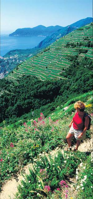 A hiker takes in the dramatic views of the Cinque terre