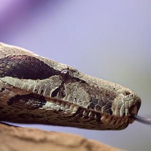Deadly snakes caused panic when they escaped from a bag on a bus in Vietnam