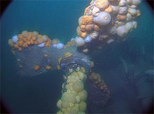The aft propeller section of the World War I U-boat on the seabed just outside Cork harbour