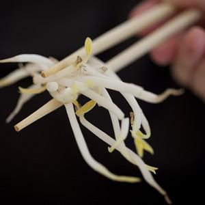 German beansprouts are the likely cause of the E.coli outbreak that has killed 22 people in Europe (AP)