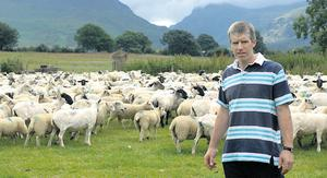 Timmy Fleming says it is a requirement of the Ring of Kerry Quality Lamb Group that all the sires of next year,s lambs are DNA tested, to provide extra traceability for the members in the group