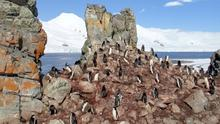 Internet search giant Google has taken its controversial StreetView mapping service to the world's southernmost continent - Antarctica. Users of the search engine will now be able to navigate around the snow-capped mountains, coastline and icebergs of Antarctica - a place that few people ever get to visit in person. They will also be able to spot several penguin colonies captured by Google's cameras