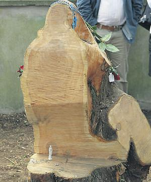 The tree stump, which people believe depicts an image of the Blessed Virgin, in the grounds of the church in Rathkeale, Co Limerick.