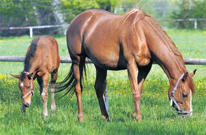 Producing a healthy and profitable foal requires preparation and attention to detail