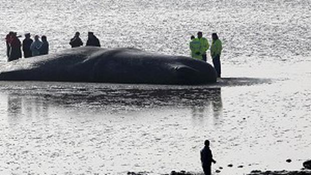Police are investigating claims that a man tried to sell the bones and teeth of a whale found dead on a beach