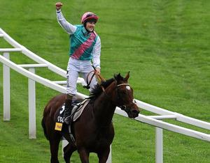 ASCOT, UNITED KINGDOM - OCTOBER 20: Tom Queally riding Frankel celebrates winning The Qipco Champion Stakes at Ascot racecourse on October 20, 2012 in Ascot, England. (Photo by Tom Dulat/Getty Images)