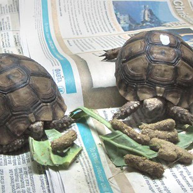 Two rare tortoises were found in the back of a van at Newhaven port in East Sussex
