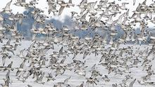 A flock of birds brave the winter conditions and gusty winds near Dollymount Strand in Dublin yesterday