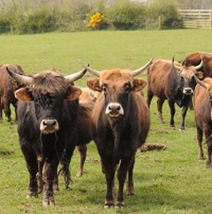 A rancher said they are giving 30 cattle to the poor on orders from his kidnappers