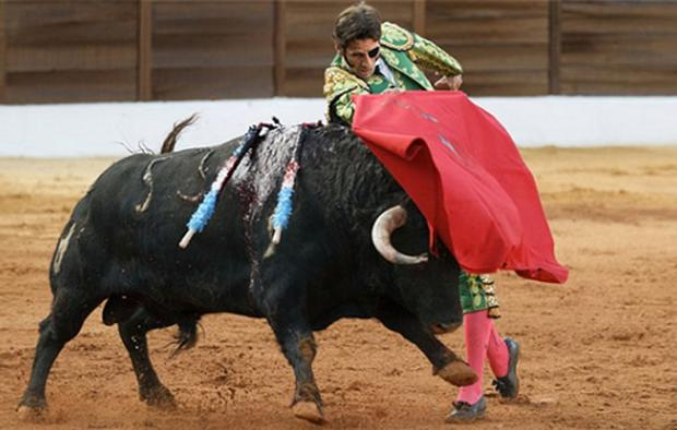 Spanish bullfighter Juan Jose Padilla performing during a bullfight in the southwestern Spanish town of Olivenza. Photo: AP