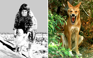 """After a """"terrifying"""" 32-year ordeal that divided the nation, Lindy Chamberlain finally received an official ruling from an Australian coroner that a dingo killed her baby. Photo: GETTY/AP"""