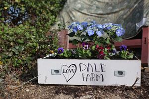 Flowers are planted in a draw at the barricade of the main gate to the Dale Farm. Photo: Getty Images