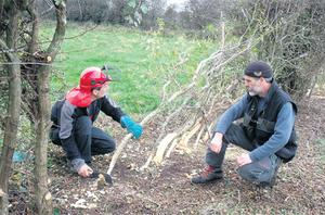 The Hedgelaying Association of Ireland will have a demonstration site with a laid hedge on display at the event in Birr