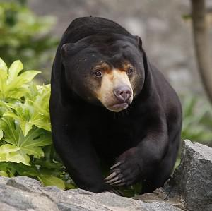 Firefighters saved a black bear which was 60 feet up a tree