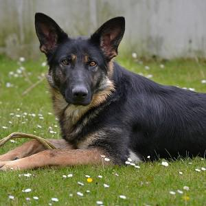 Would-be police dog Vegas has been inundated with offers of a new home