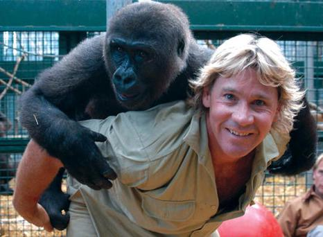Steve Irwin was famous for his close-up antics with dangerous wildlife. Photo: Australia Zoo via Getty Images