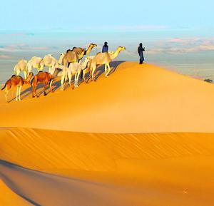 Tuareg nomads with camels in sand dunes of Sahara Desert, Arakou. Deserts could help reduce global warming, researchers say