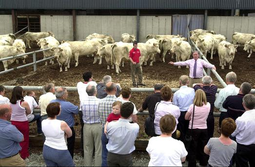 Patsy McCabe, Blakestown Farm, Ardee, Co Louth, hosts a North Eastern Charolais Club farm visit to his herd. Potential breeders should go along to similar farm visits and join the breeding club before deciding to buy pedigree cattle