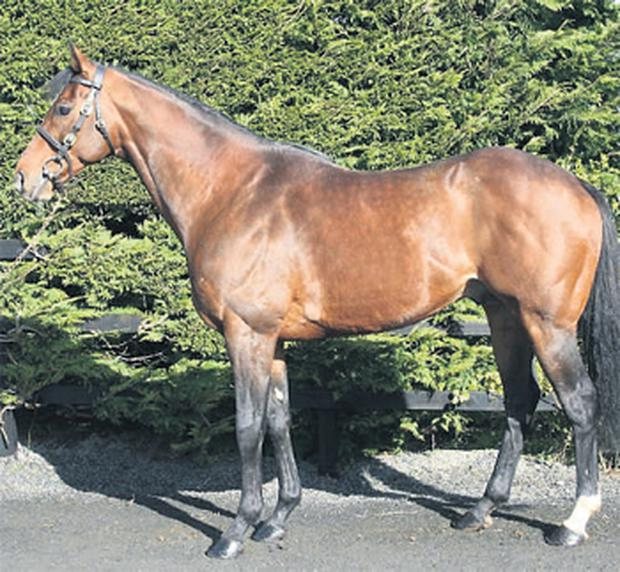 Clongeel is standing a son of Sadler's Wells – a fine stallion named Wareed