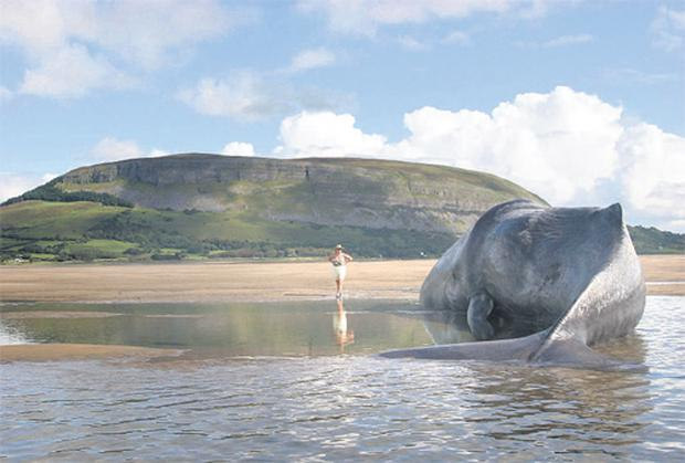 GENTLE GIANTS: Local woman Nod Martin and a beached whale at Culleenamore, Co Sligo, in the shadow of Knocknarea