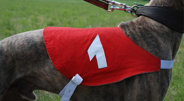 Thirteen venues across the country will host greyhound racing tonight