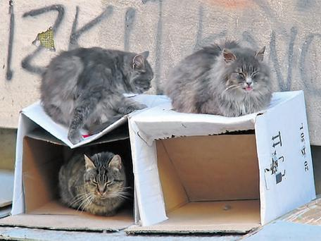 Cats at home: These cats could accommodate a tenant. For humans with space, taking in a tenant could be a good way of earning extra income