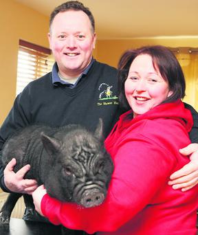 Gerry and May T Coyle with their lucky Vietnamese Pot Belly Pig