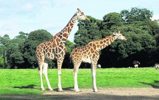 Fota Wildlife Park will please just about every age group